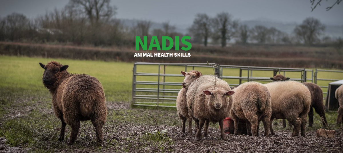 NADIS Animal Health Skills - Non-parasitic Skin Conditions in Sheep