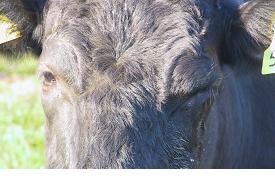 Nadis National Animal Disease Information Service