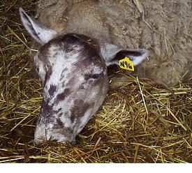 NADIS - National Animal Disease Information Service