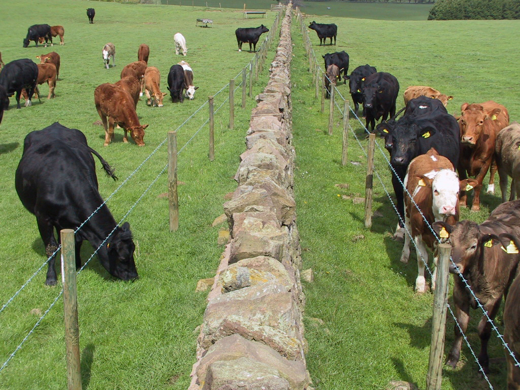 11 BVD double perimeter fence biosecurity