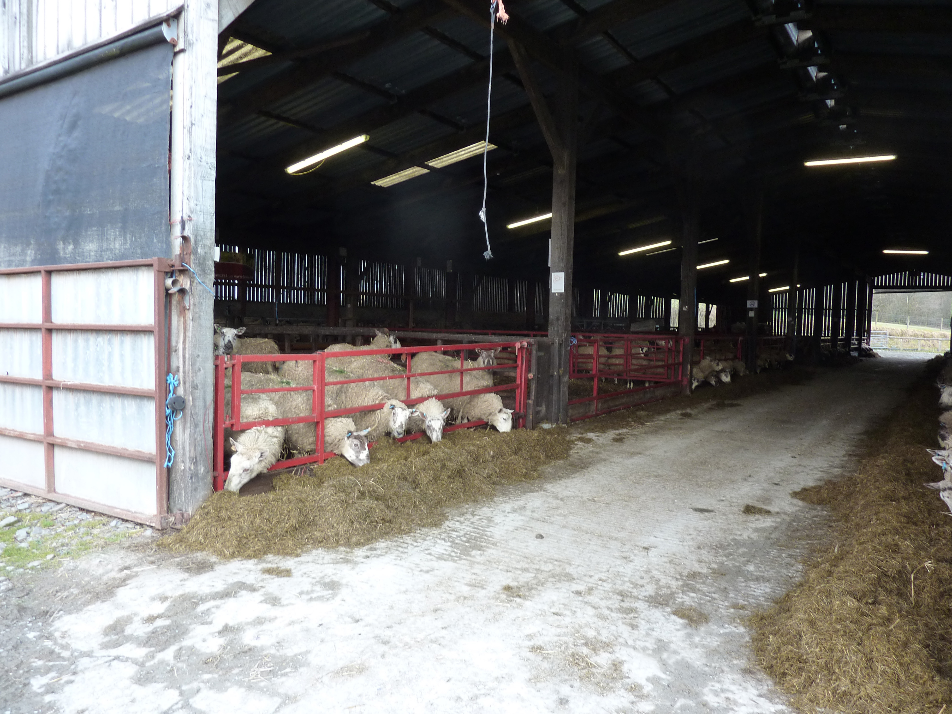 Maintain sheep in single age groups